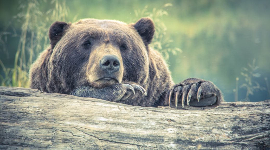 Bear Country Safety - The Truth About Being Bear Aware