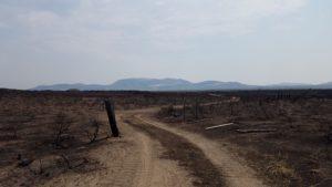 Burned wasteland